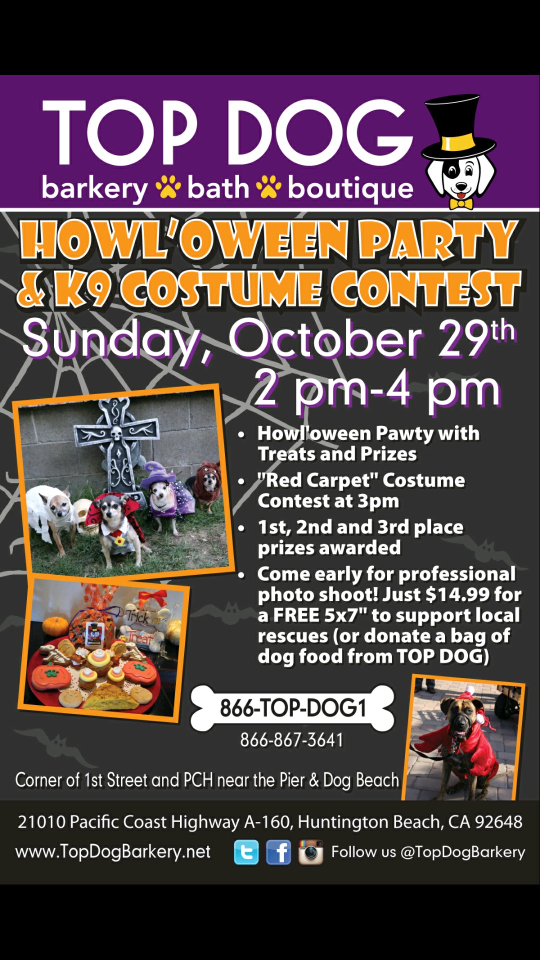 costume contest, dog party, howloween
