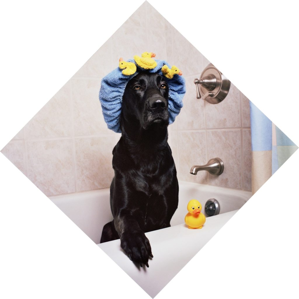 Top dog what not to do when doing a dog wash solutioingenieria Image collections