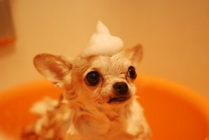 Easy Ways to Give a Dog Bath
