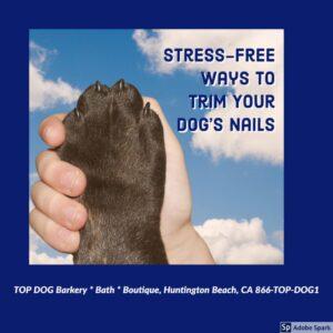 Stress-Free Dog Nail Trimming - Dog Grooming