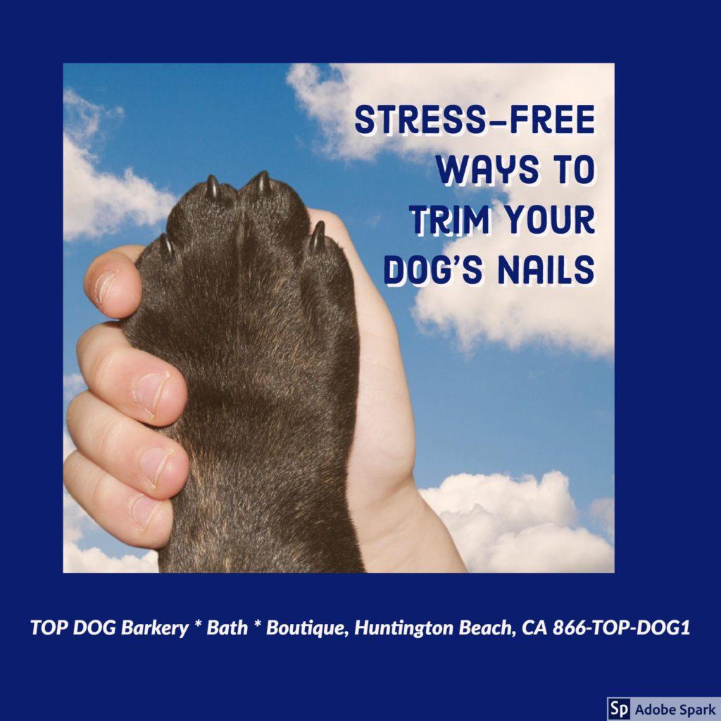 Stress-Free Dog Nail Trimming