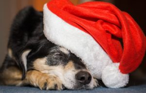 Pet Holiday Food Guide